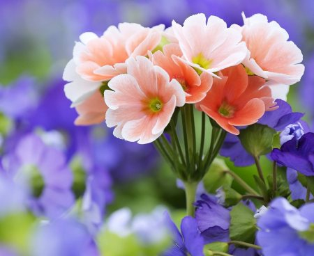 beautiful_flowers_wallpaper_9b2ec