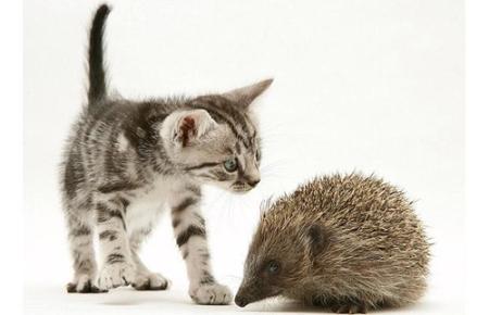 poze-haioase-pisici-arici