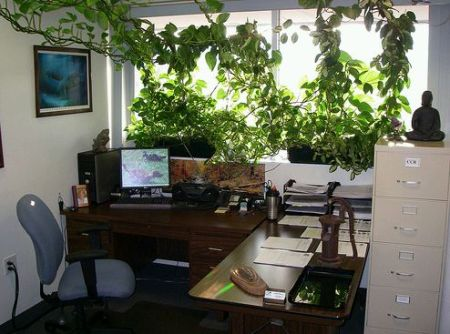 planta-de-birou