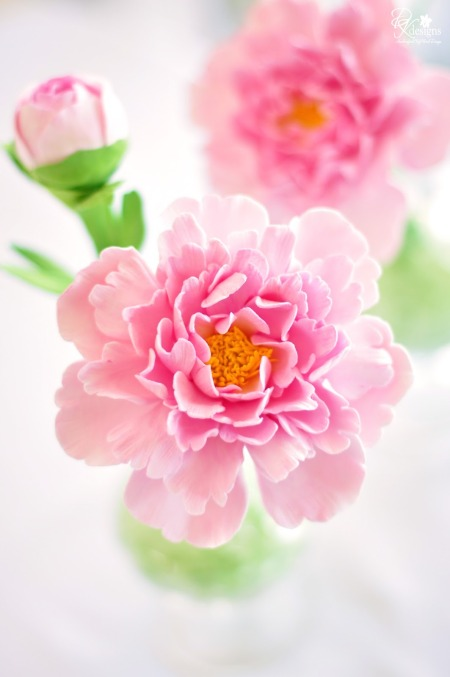pink-peony-bloom